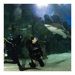 Aquarium Eco Diver