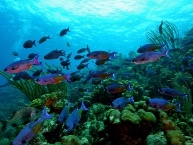 Bonaire Blaza Resort
