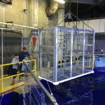 Cage Diving at the Aquarium