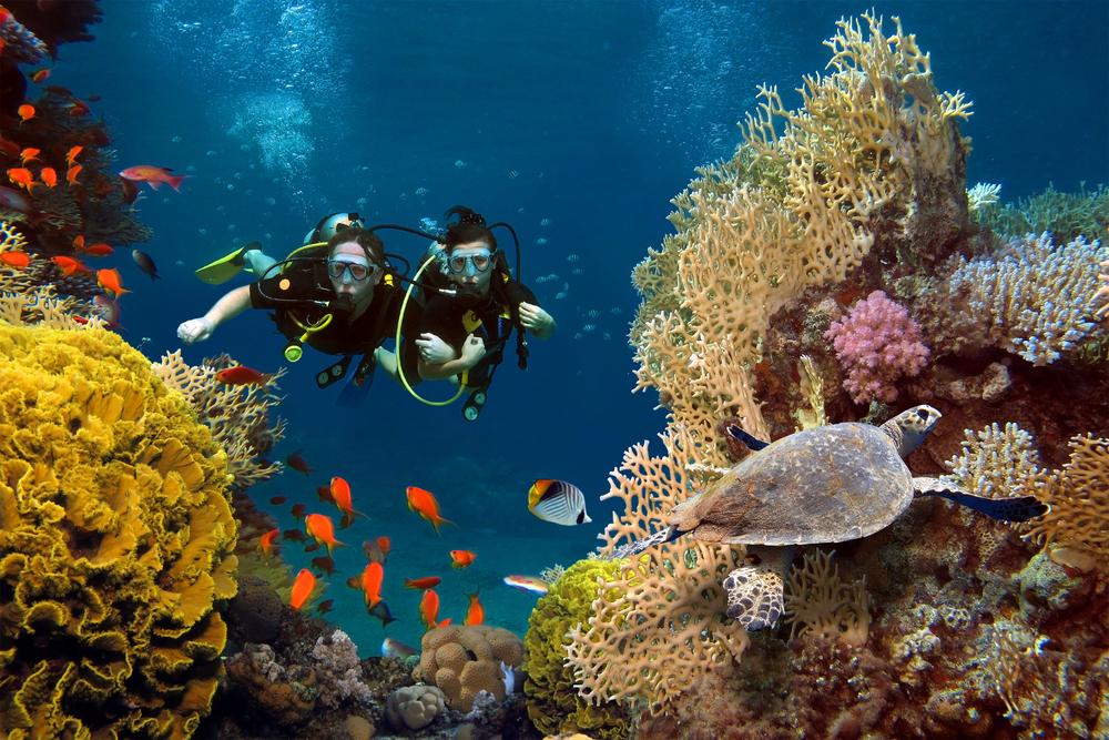 Što biste radili s osobom iznad, prikaži slikom - Page 27 Couple-scuba-diving-in-ocean-reef-a1-scuba