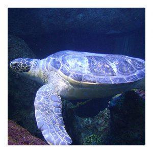 Digital Underwater Photography
