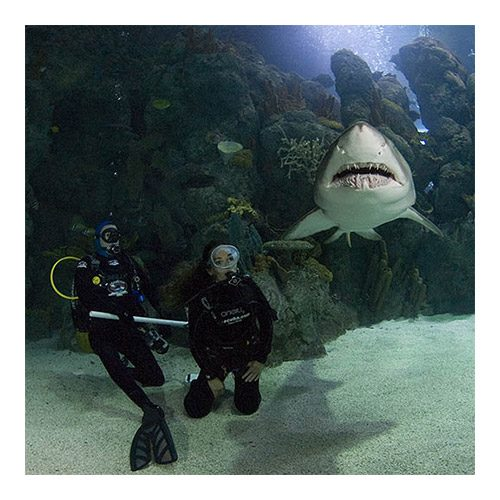 Dive With The Sharks