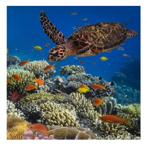 Aquarium Eco Diver Specialty Program