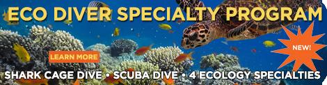 Aquarium Eco Diver Specialty