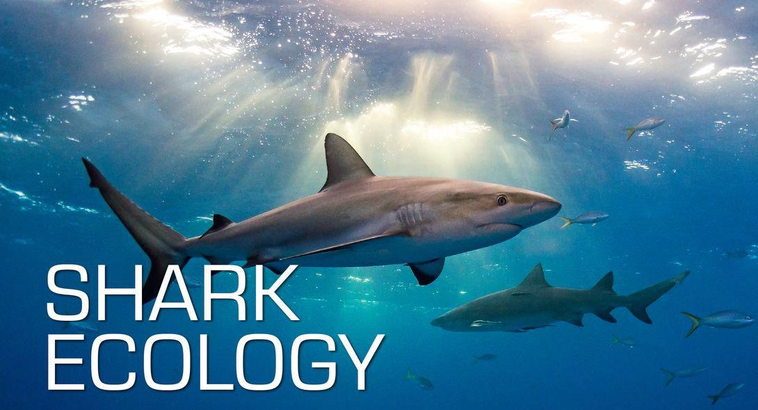 Ecology Diver Course