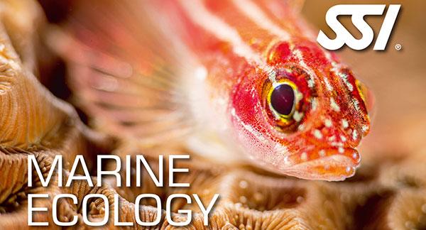 Marine Ecology