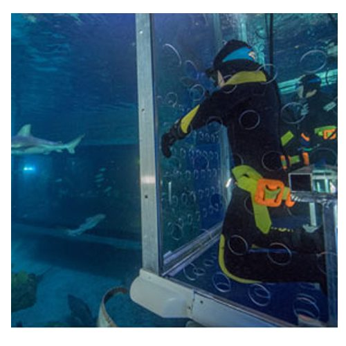 shark cage experience