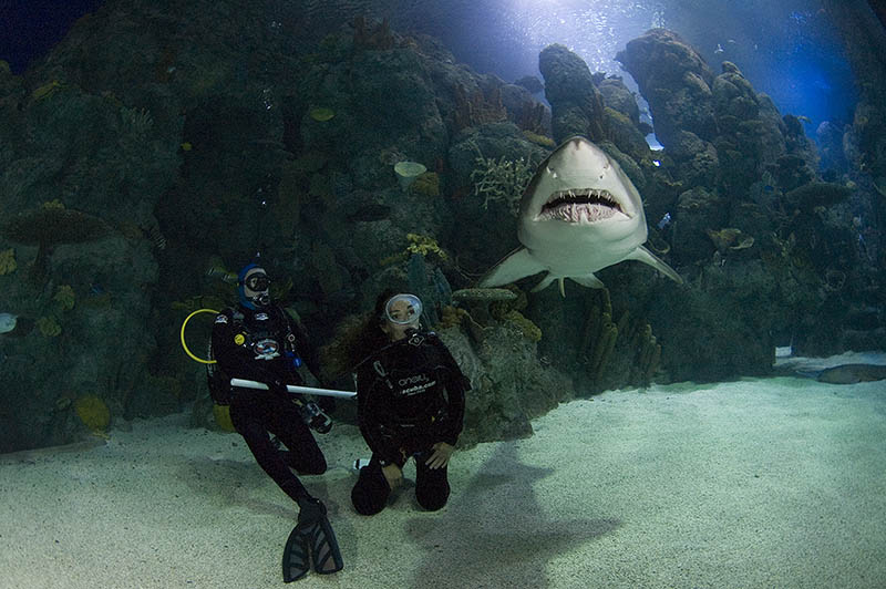 Dive With Ths Sharks