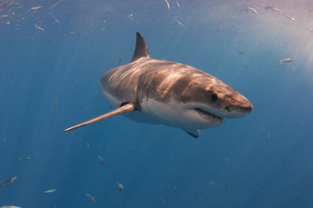 Our Shark Cage will be THE Experience of a Lifetime!
