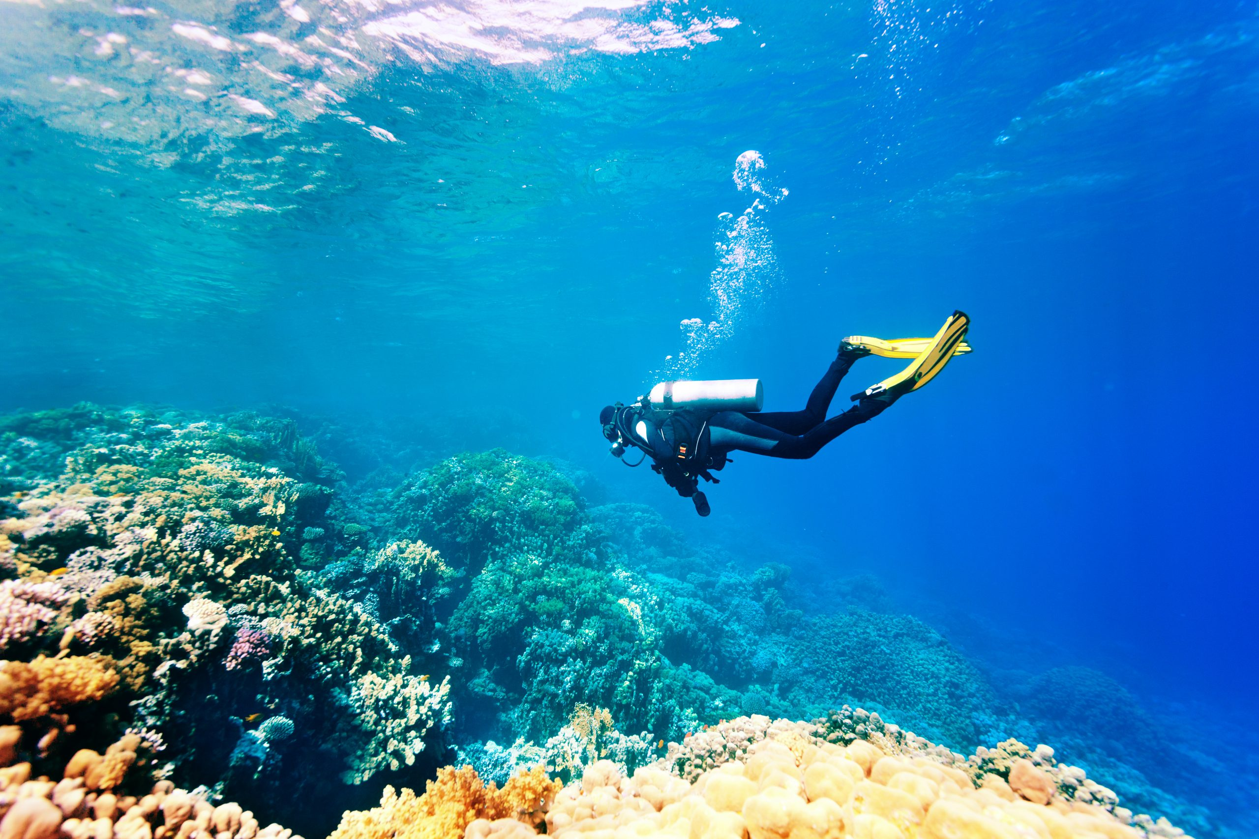 Scuba Diving Above coral