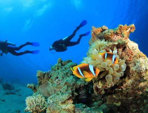 Drift Diving in Cozumel, or Snorkeling the Marine Sanctuary in Indonesia: Why You Need to Travel with A-1 in 2019