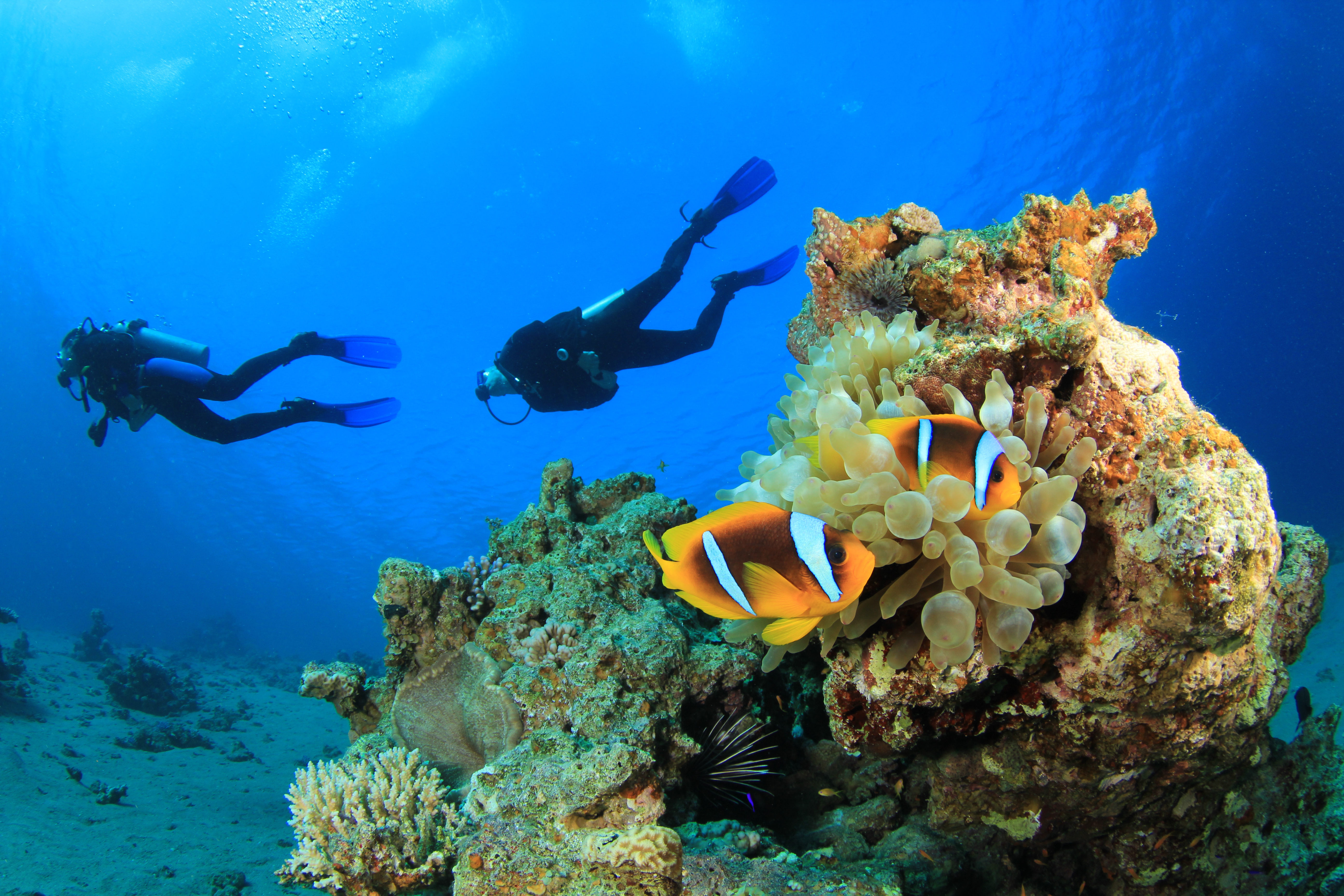 group escorted dive trips