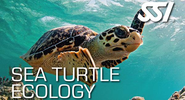 Turtle Ecology